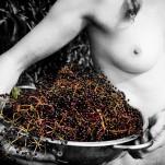 fresh herbs - elderberry