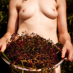 fresh herbs - elderberry