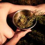 fresh herbs - rosemary