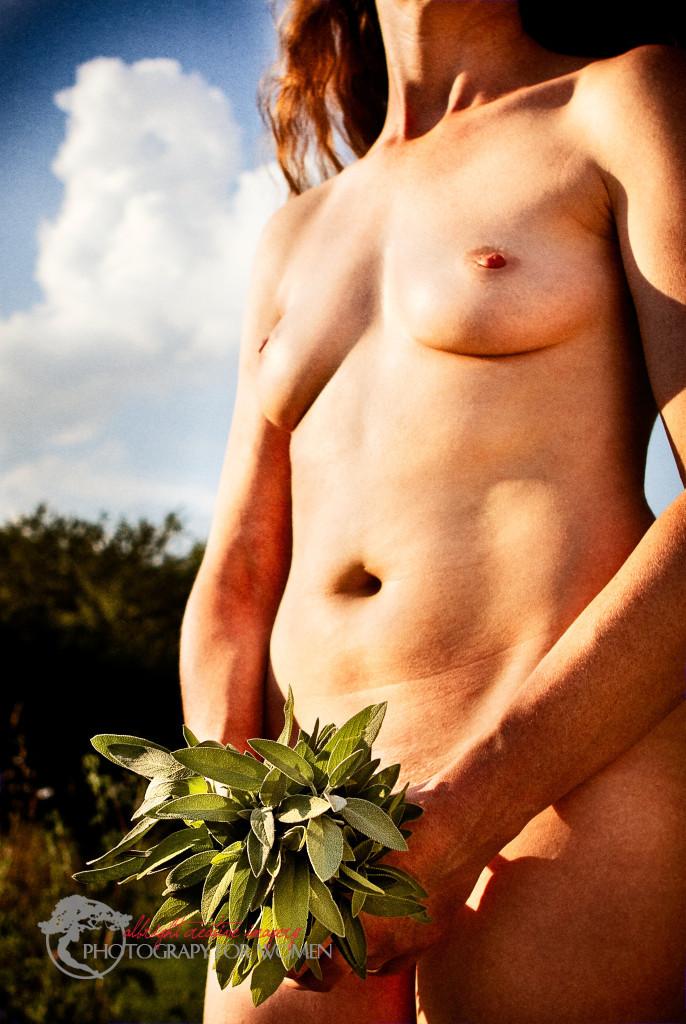 fresh herbs - sage